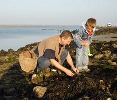 Pêche au coquillage en Vendée