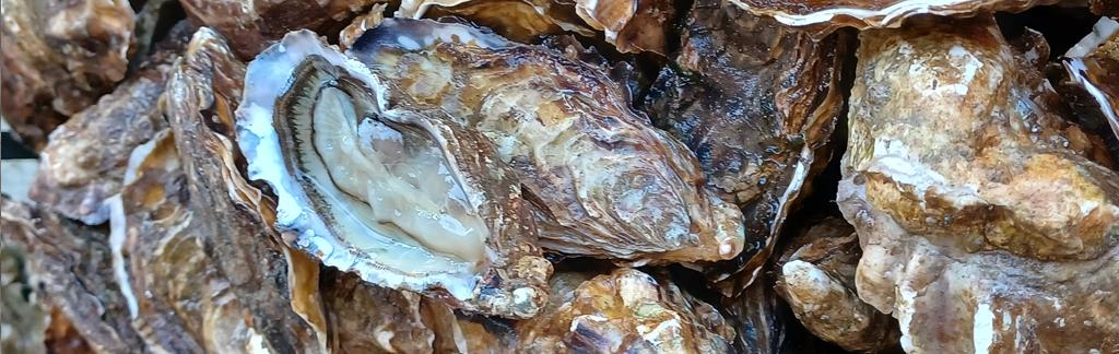 Huître de Vendée